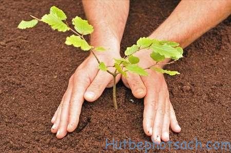 Ngăn chặn chặt phá rừng, đồng thời trồng thêm nhiều cây xanh