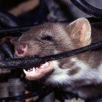 Tổng Hợp Cách Đuổi Chuột Hiệu Quả Ra Khỏi Căn Nhà Của Bạn