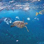 Thực Trạng Rác Thải Nhựa Tại Việt Nam – Mối Nguy Hại Dai Dẳng